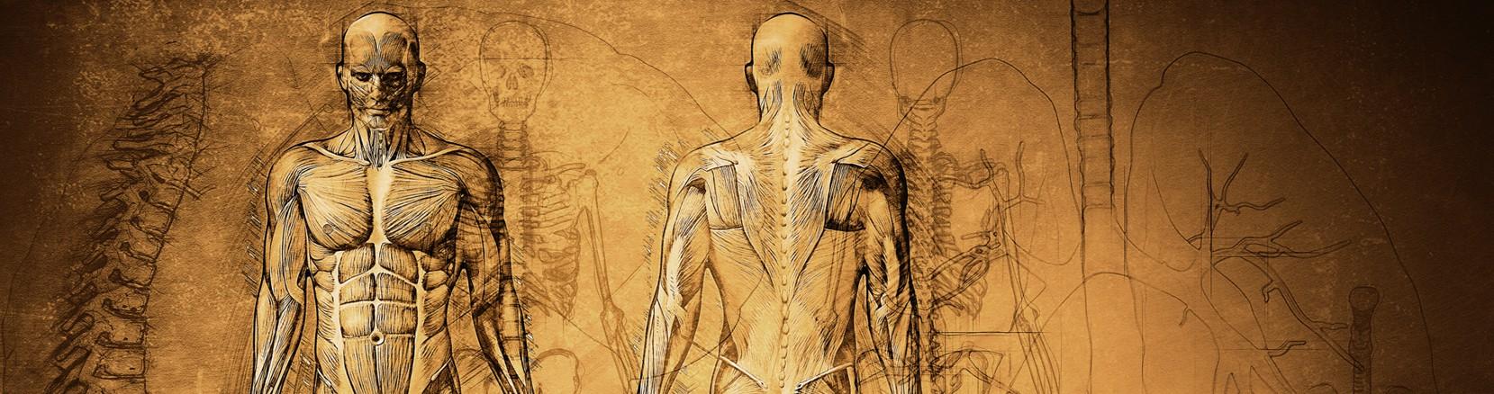 Diagnóstico corporal para terapeutas online
